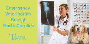 Emergency Veterinarian Needed, BONUS: Raleigh, North Carolina